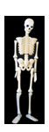 Plastic Skeleton Figure Prop