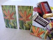 Candy Wrappers :: Beauty In Flowers :: HCW09