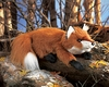 Folkmanis Puppet <br>Small Red Fox