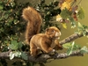 Folkmanis Puppet <br>Red Squirrel