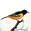Oriole Feeders