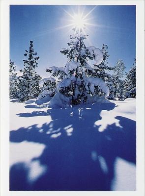 STEPHEN INGRAM - SUNBURST OVER A PINION PINE, EASTERN SIERRA, SWALL MEADOWS, CA - HOLIDAY CARD