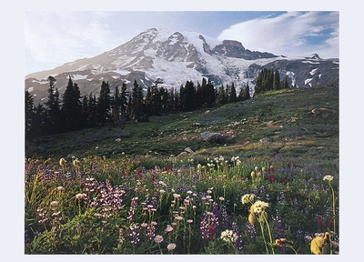 MOUNT RAINIER FROM PARADISE FLOWER MEADOWS, WA