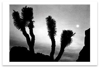JOSHUA TREES & MOON, JOSHUA TREE NATIONAL MONUMENT, CA - ANSEL ADAMS NOTECARD