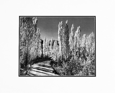 "POPLARS, AUTUMN, OWENS VALLEY, CALIFORNIA  Large Ansel Adams Matted Reproduction (16"" x 20"")"