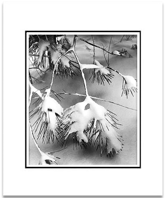 ANSEL ADAMS - PINE BRANCHES IN SNOW, YOSEMITE - SMALL MATTED REPRO