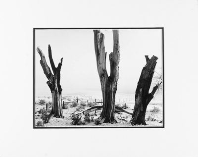 "ANSEL ADAMS - DEAD TREES, WINTER, NEAR CARSON CITY, NV  Large Ansel Adams Matted Reproduction (16"" x 20"")"