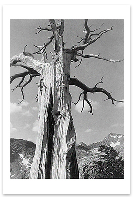 IN THE SIERRA NEVADA, 1932 - ANSEL ADAMS NOTECARD
