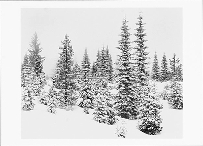 FOREST IN SNOW, YOSEMITE NATIONAL PARK, CA, 1981
