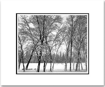 "ANSEL ADAMS - YOUNG OAKS IN SNOW, YOSEMITE NAT'L PARK  Large Ansel Adams Matted Reproduction (16"" x 20"")"