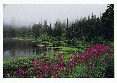FOG, FIREWEED, PICTURE LAKE AND SUBALPINE FIRS, MT BAKER, SNOQUALMIE NATIONAL FOREST, WA