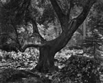 """LATE AUTUMN EVENING, MERCED CANYON, CALIFORNIA   Large Ansel Adams Matted Reproduction (16"""" x 20"""")"""