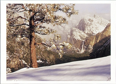 BRIDALVEIL FALL AND JEFFREY PINE, YOSEMITE NATIONAL PARK, CA - HOLIDAY CARDS