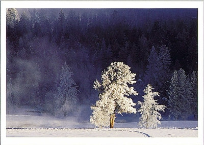 BRENDA THARP - WINTER MORNING, YELLOWSTONE NATIONAL PARK, WY - HOLIDAY CARD
