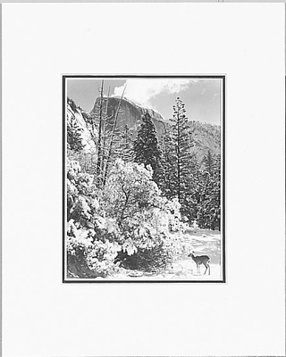 ANSEL ADAMS - HALF DOME, TREES, DEER - SMALL MATTED REPRO