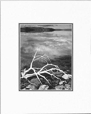 ANSEL ADAMS - WHITE BRANCHES, MONO LAKE - SMALL MATTED REPRO
