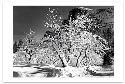 HALF DOME, APPLE ORCHARD, WINTER, YOSEMITE NATIONAL PARK, CA, c 1935 - ANSEL ADAMS NOTECARD