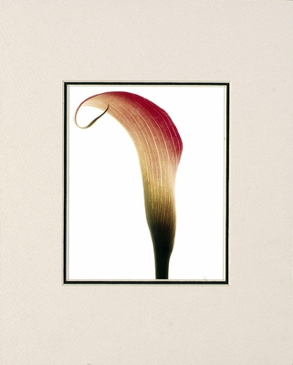 CAROL HENRY CALLA LILY - SMALL MATTED REPRODUCTION