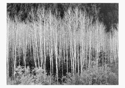 ANSEL ADAMS - ASPENS, DAWN, DOLORES RIVER CANYON, CO, 1937 - SMALL POSTCARD