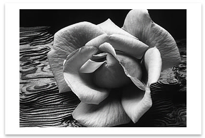 ROSE AND DRIFTWOOD, SAN FRANCISCO, CA, c 1932 - ANSEL ADAMS NOTECARD