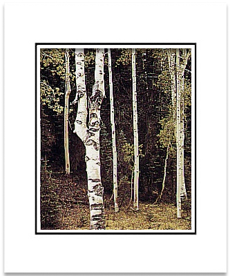 ANSEL ADAMS - ASPENS, NORTH RIM, GRAND CANYON - SMALL MATTED REPRO
