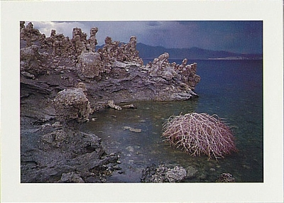 TUMBLEWEED, SHORELINE DETAIL, MONO LAKE, CA