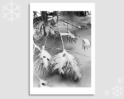 "PINE BRANCHES IN SNOW - ANSEL ADAMS HOLIDAY CARD ""SEASON'S GREETINGS"""