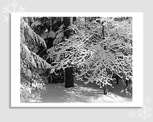 LACY BRANCHES IN SNOW - HOLIDAY CARDS