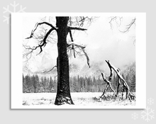 BLACK OAK, FALLEN BRANCHES - HOLIDAY CARDS