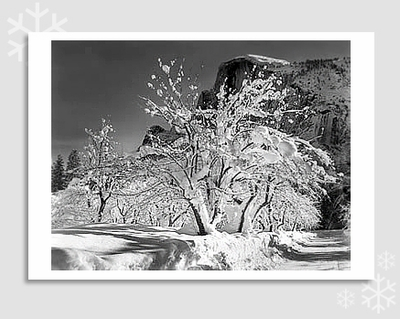 "HALF DOME, APPLE ORCHARD - ANSEL ADAMS HOLIDAY CARD ""SEASON'S GREETINGS"""