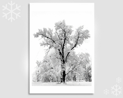 OAK TREE,  SNOWSTORM - HOLIDAY CARDS