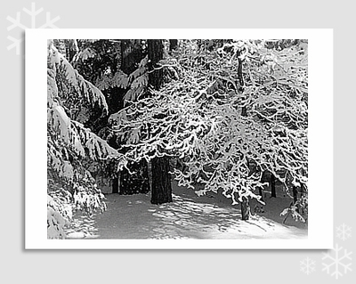 "LACY BRANCHES IN SNOW - ANSEL ADAMS HOLIDAY CARD ""SEASON'S GREETINGS"""
