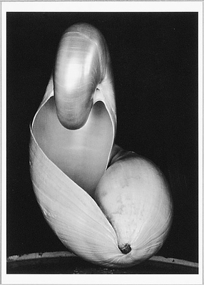 EDWARD WESTON: SHELLS, 1927 SMALL POSTCARD