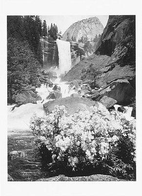 VERNAL FALL AND AZALEAS, YOSEMITE NATIONAL PARK, CA 1940