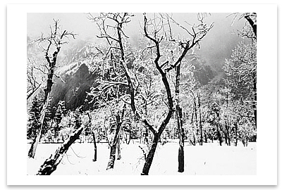 MEADOW, TREES AND SNOW, WINTER AFTERNOON, YOSEMITE NATIONAL PARK, CA c 1965 - ANSEL ADAMS BLANK NOTECARD