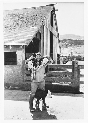 ART ROGERS - GEORGE NUNES AND HIS TRIPLET CALVES, POINT REYES, CA, 1978 - NOTECARD