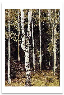 ANSEL ADAMS - ASPENS, NORTH RIM, GRAND CANYON, AZ - NOTECARD