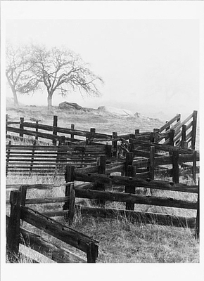 TIMOTHY WOLCOTT - FENCE, FOG AND TREES, SIERRA NEVADA, CA, 1984 - NOTECARD