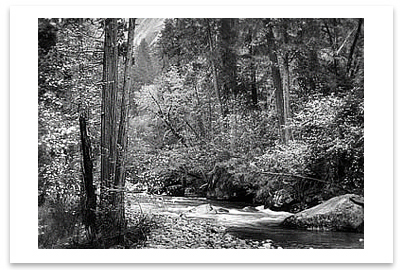 TENAYA CREEK, DOGWOOD, RAIN, YOSEMITE NATIONAL PARK, CA, c 1948 -ANSEL ADAMS LARGE POSTCARD