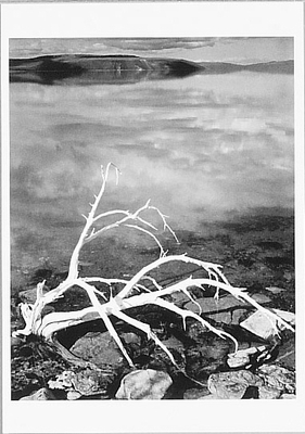 ANSEL ADAMS - WHITE BRANCHES, MONO LAKE - SMALL POSTCARD