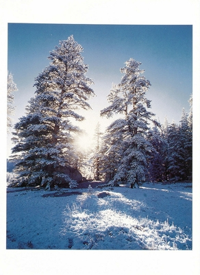 FRESH SNOW, KINGS CANYON NATIONAL PARK, CA - HOLIDAY CARDS