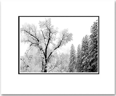 ANSEL ADAMS - TREE AND SNOW, EL CAPITAN MEADOW - SMALL MATTED REPRO