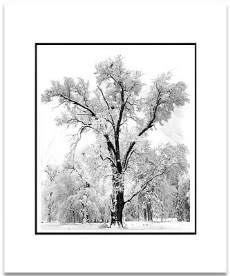 ANSEL ADAMS - OAK TREE, SNOWSTORM, YOSEMITE - SMALL MATTED REPRO