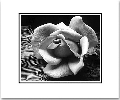 ANSEL ADAMS - ROSE AND DRIFTWOOD, SAN FRANCISCO - SMALL MATTED REPRO