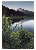MOUNT HOOD AND IT'S RELFECTION IN TRILLIUM LAKE, MT HOOD NATIONAL FOREST
