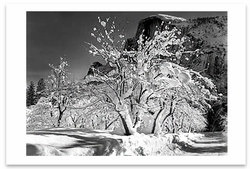HALF DOME, APPLE ORCHARD, WINTER, YOSEMITE NATIONAL PARK, CA, c 1935