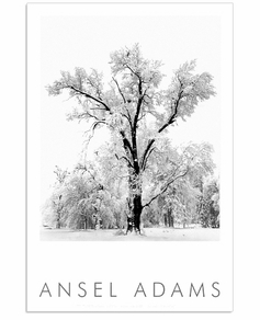 OAK TREE, SNOWSTORM, YOSEMITE  (OUT OF STOCK)
