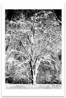 OAK TREE IN SNOW, YOSEMITE NATIONAL PARK, CA, c 1933