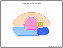Intracellular protein complex