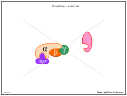 G-protein - inactive
